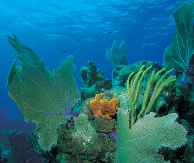 red sea reef mersa alam